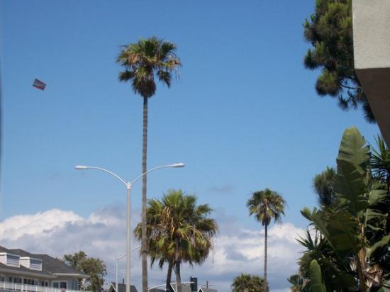 Newport Beach, CA: Palm Trees!!!