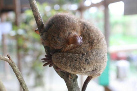 Bohol Island One Day Tour - PTN Travel Corp: Nä, nu är jag trött, stick.