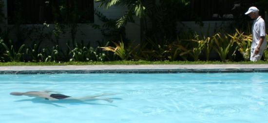Cebu White Sands Resort & Spa: Simma eller gå
