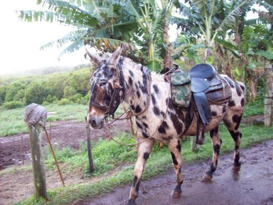 Lahaina, HI: Hawaii 2009 181