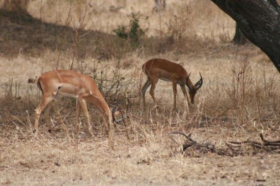 Bilde fra Serengeti National Park
