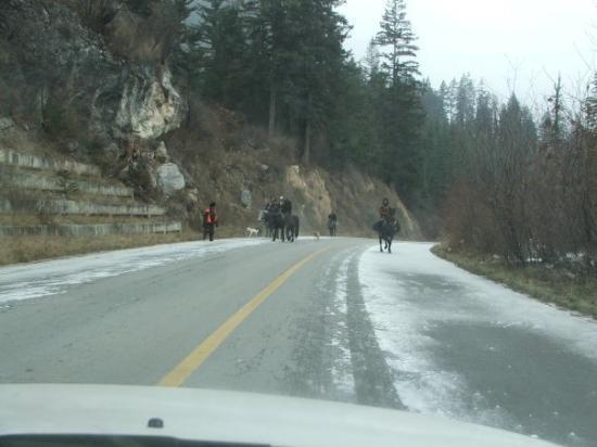 Jiuzhaigou County, Kina: Road on the way to Jiuzhaigou