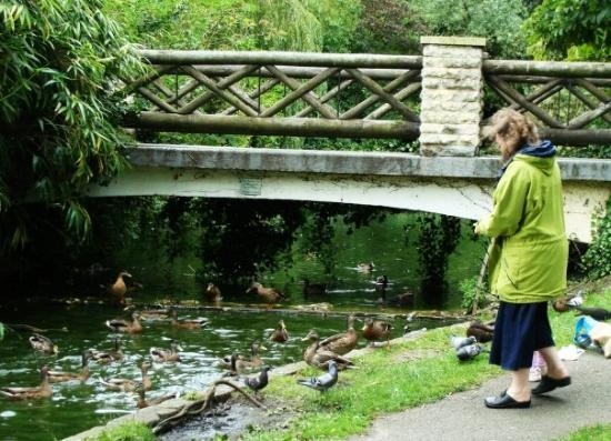 Bath, UK: A woman feeding some ducks...