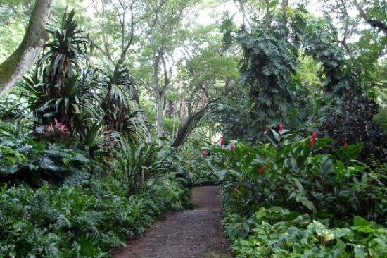 Lihue, HI: Allerton Gardens