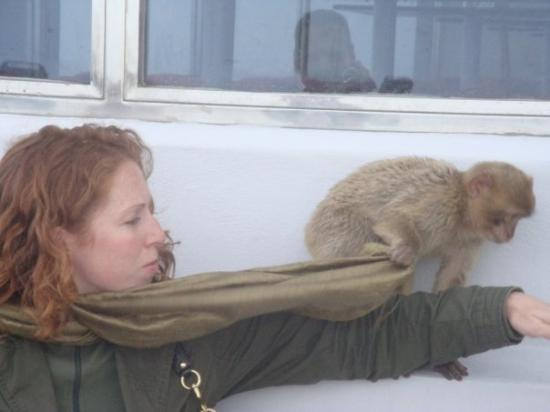 Gibraltar: Its all in a day, baby monkeys climbing my arm.