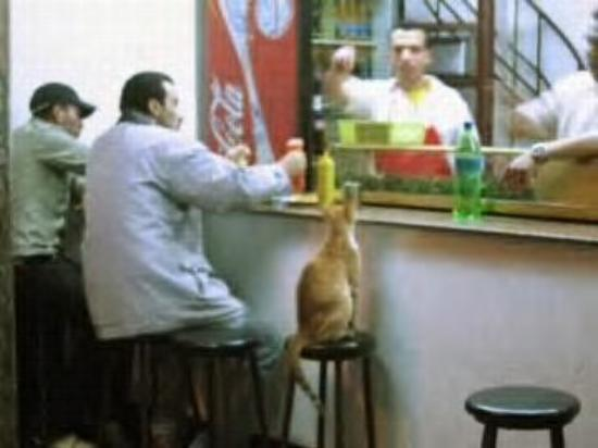 Tanger, Marokko: Ok...two guys and a cat walk into a bar in Tangier....