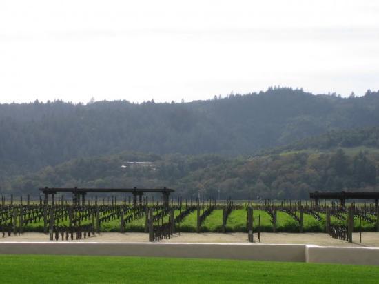 Santa Rosa, CA: Robert-Mondavi Vineyard 2.28.10