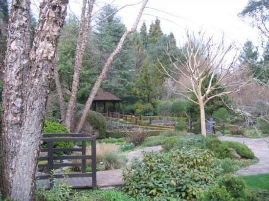 Santa Rosa, CA: Gardens at Ferrari-Carano Vineyard 2.26.10