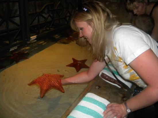 The Royal at Atlantis, Autograph Collection: Live starfish