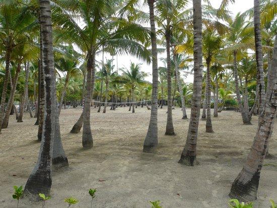 ClubHotel Riu Merengue: Playa