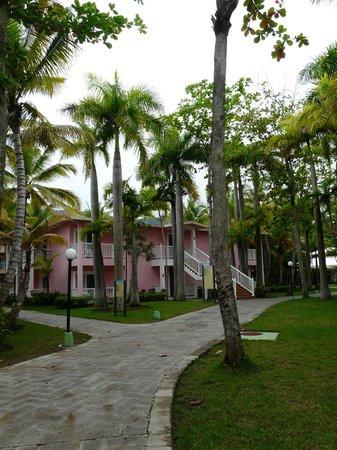 ClubHotel Riu Merengue: Riu Mambo