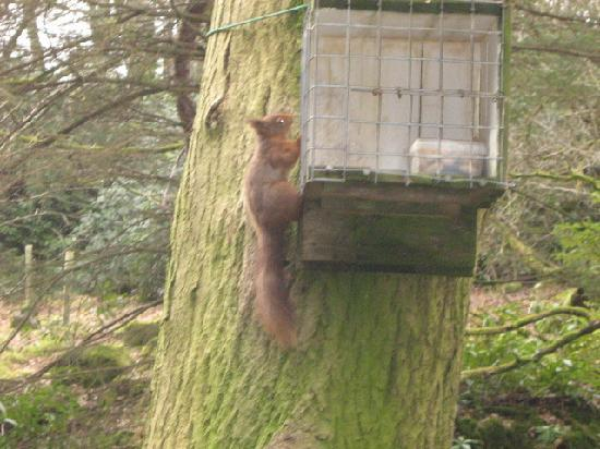 Shap Wells Hotel: The Red Squirell