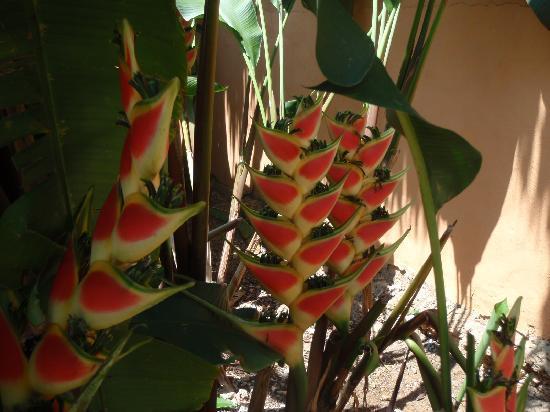 Grand Bahia Principe El Portillo: Fleur paradisiaque