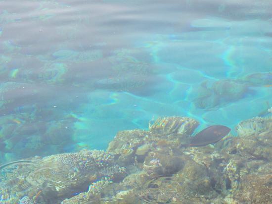 Baron Resort Sharm El Sheikh: Red sea fishes