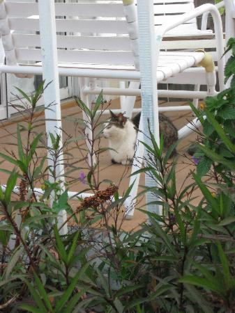 Bonefish Resort: LIttle resident cat that some of us feed (office provided us with cans of food, etc.)