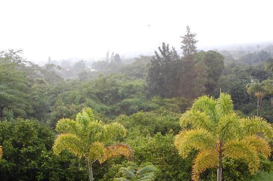 Aloha Guest House: 周辺の自然が素晴らしいです