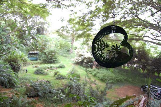 Dragonfly Ranch - Healing Arts Center: 中庭の様子