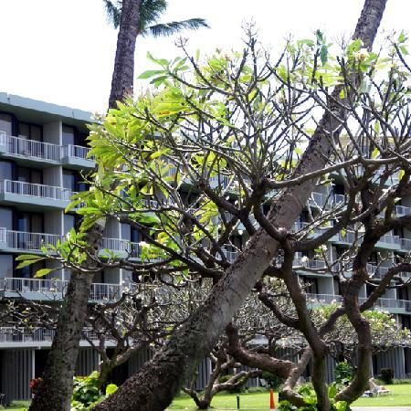 Ka'anapali Beach Hotel: View of Lanai Wing