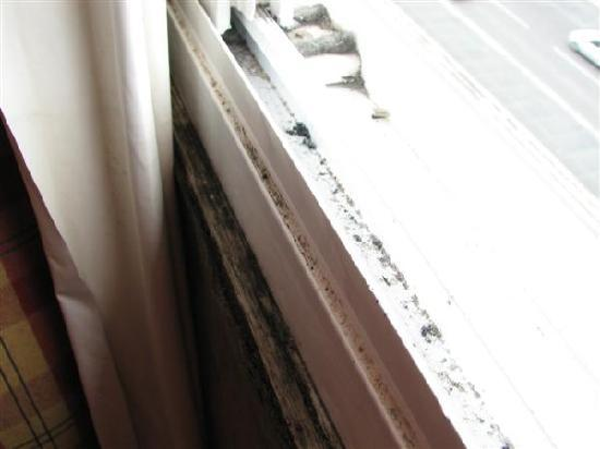 Hotel Afrin Lisboa: The front rooms have mould almoust everywere.