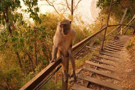 Centara Grand Beach Resort & Villas Krabi: monkey trail and monkey!