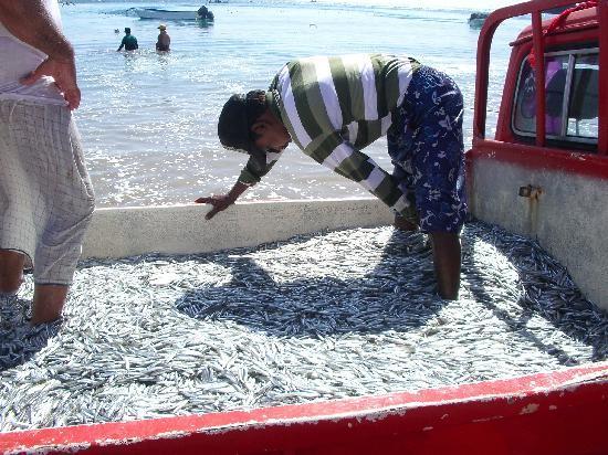 Miramar Al Aqah Beach Resort: Pescatori in spiaggia !