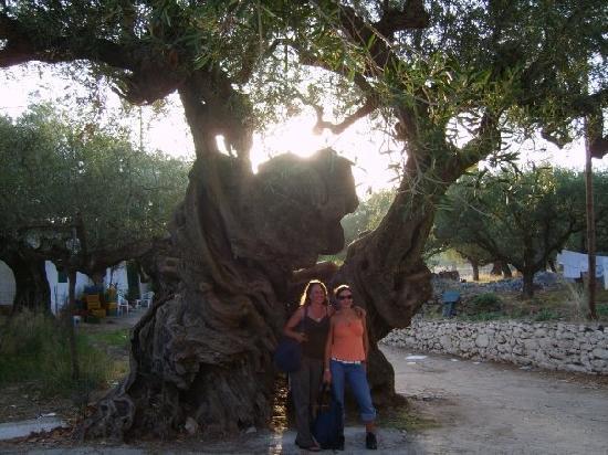 Hotel Macedonia: Oldest Olive tree in Exo Horo