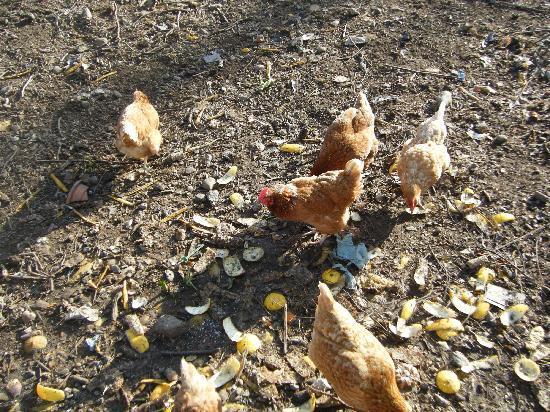 Applecroft House: Fresh eggs for breakfast!