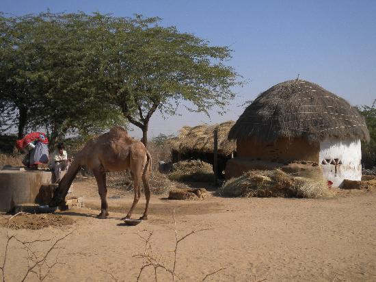 Vinayak Guest House: Local dung-hut village (on tour)