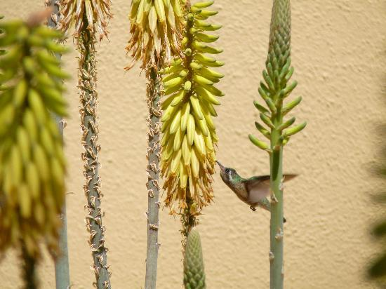 Hotel Riu Santa Fe: Birds everywhere at the Santa Fe