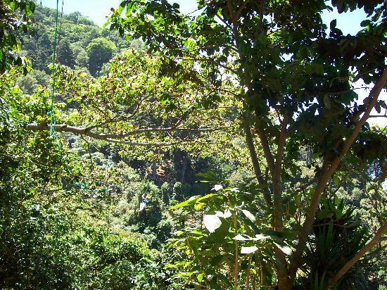 Apaneca, El Salvador: The treeline