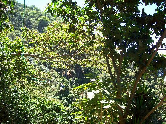Apaneca Canopy Tour: The treeline