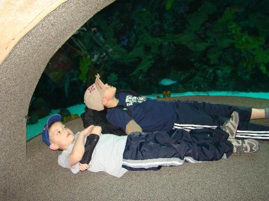 Tennessee Aquarium: Chilling at the aquarium