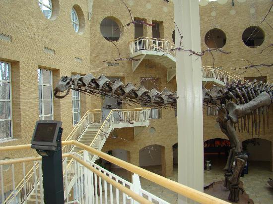 Fernbank Museum of Natural History: Dinosaurs at Fernbank