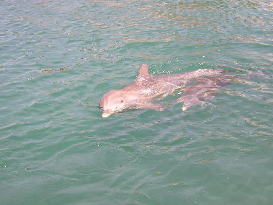 Catalonia Riviera Maya: Dolphins at the Marina