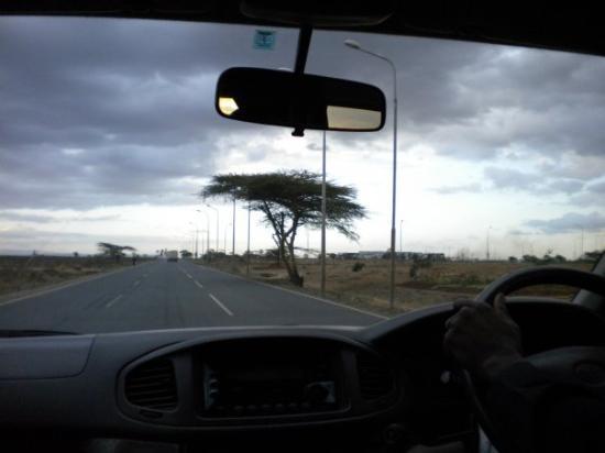 Nairobi, Kenya: African tree