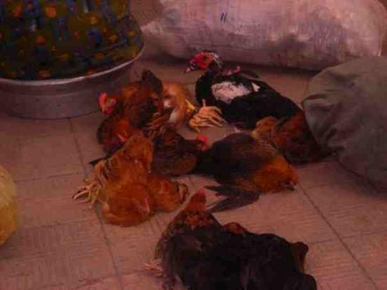 Alexandria, Egypt: The first thing we saw getting off the train in Alex... Chilln Chickens...