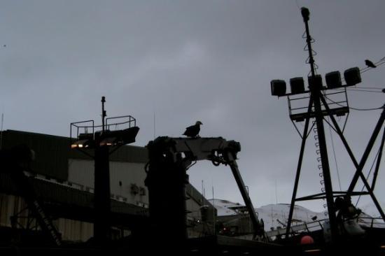 Bilde fra Dutch Harbor