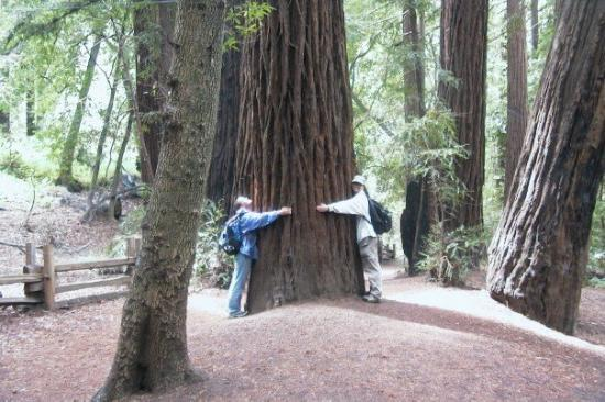 Image result for california tree huggers