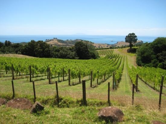 Waiheke Island, Nya Zeeland: The true face of the island