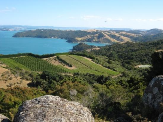 Isola Waiheke Photo