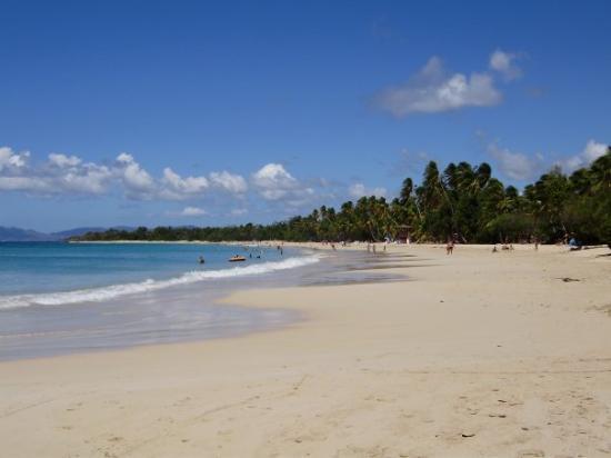 Fort-de-France, Martinique: Les Salines, la plus grande et la plus touristique !! pas forcément la plus belle à mon gout ;