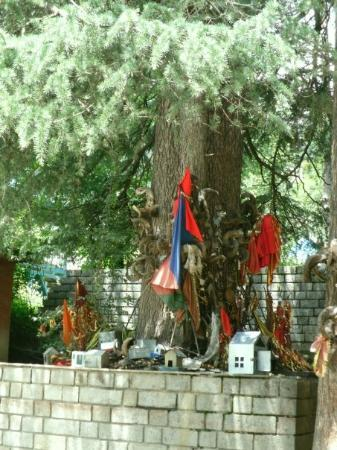 Manali, India: Sacred tree where villagers make offerings of knives, goat horns and tin effergies of animals, p