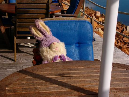 Hinchinbrook Island, Australia: Teddy and his travelling buddy Mr. Wabbit.