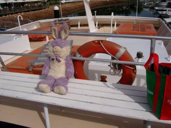Hinchinbrook Island, Australia: ...And so does Mr. Wabbit.