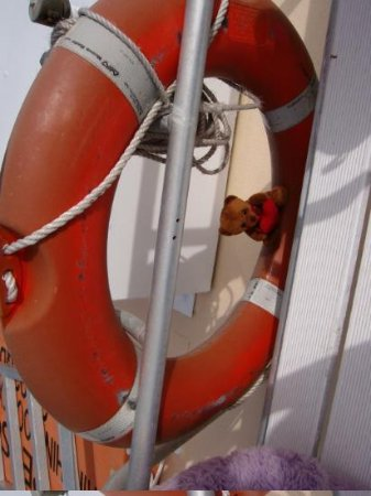 Hinchinbrook Island, Australia: Peanuts knows that safety comes first with this floating safety ring.