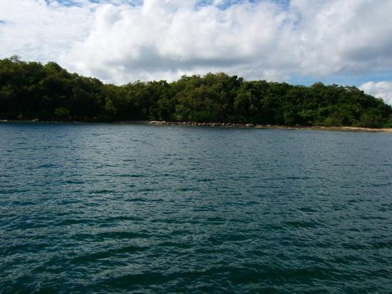 Hinchinbrook Island, Australia: Rainforest views
