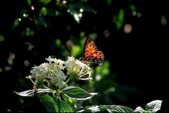Harry P. Leu Gardens: Leu Gardens, Orlando, FL