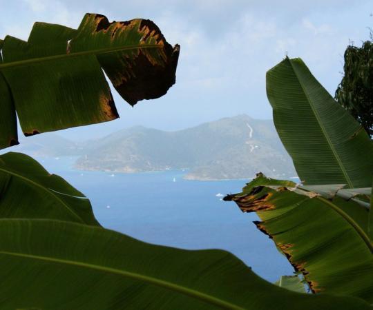 Tortola: Sage Mountain National Park