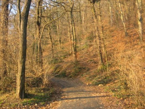 Heidelberg, Tyskland: A path up into the wooded area that I didn't have time to explore.