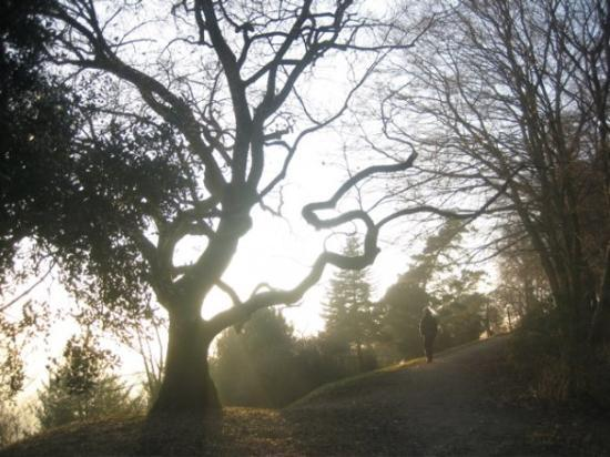 Philosophers' Way (Philosophenweg): I love this tree, especially with the light mist that enchanted the air for my whole day in Heid